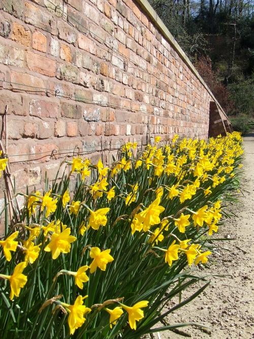 Spring flowers, Chadkirk Walled Garden