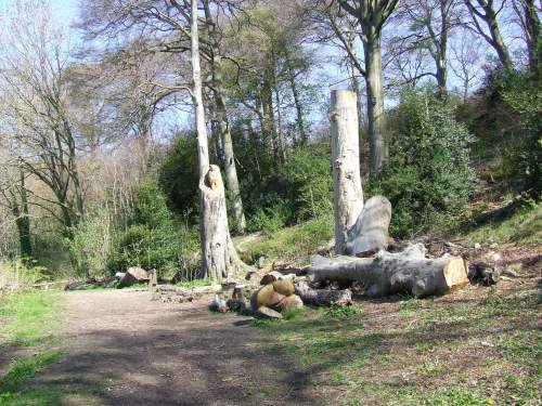 By the walled garden, the felled beech tree is part of a strategy to increase biodiversity.