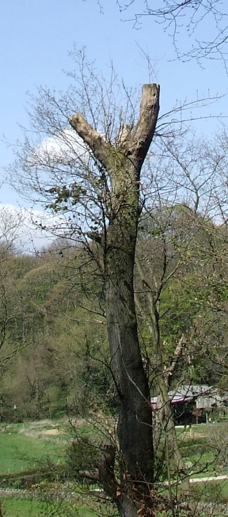 Look carefully. Can you see the work of the woodpeckers of Kirkwood?