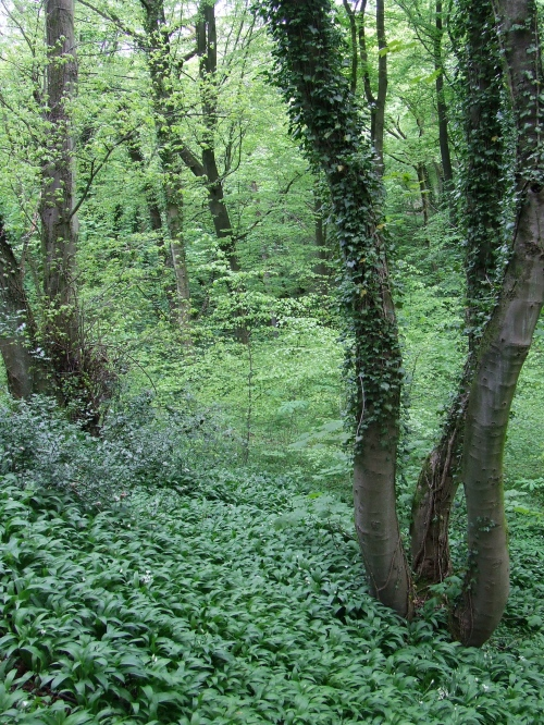 Higher Kirkwood in May               Photo: Artemisia