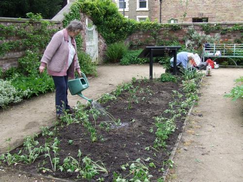 Walled garden replant                        Photo: Artemisia