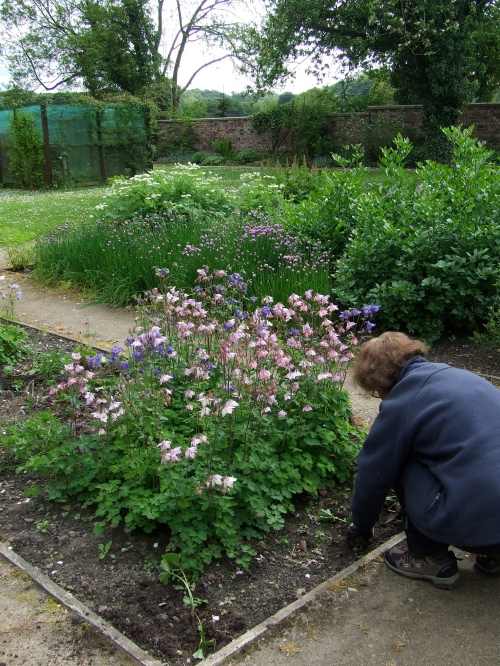 Weeding and planting               Photo: Artemisia