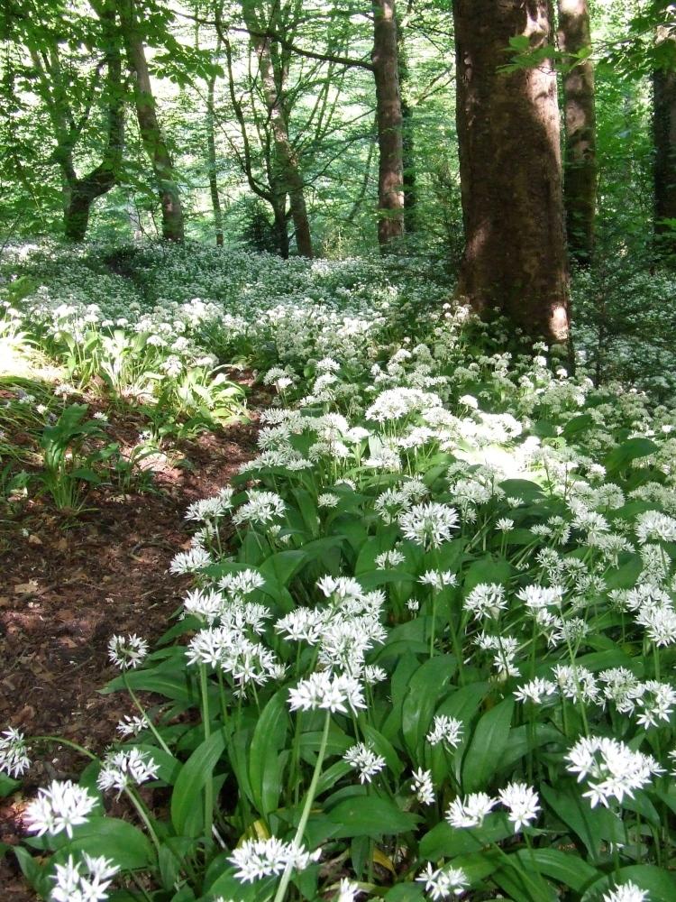 June flowers in Kirk Wood (1/2)