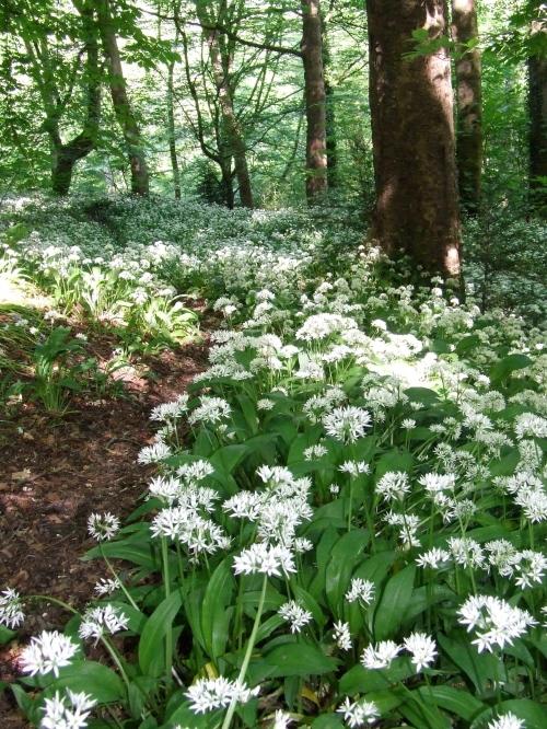Kirk Wood in June          Photo: Artemisia