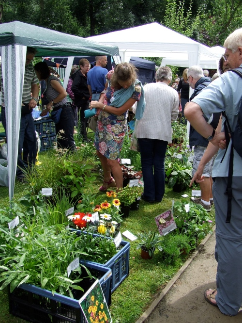 Early visitors snap up healthy plants at bargain prices. Photo: Artemisia