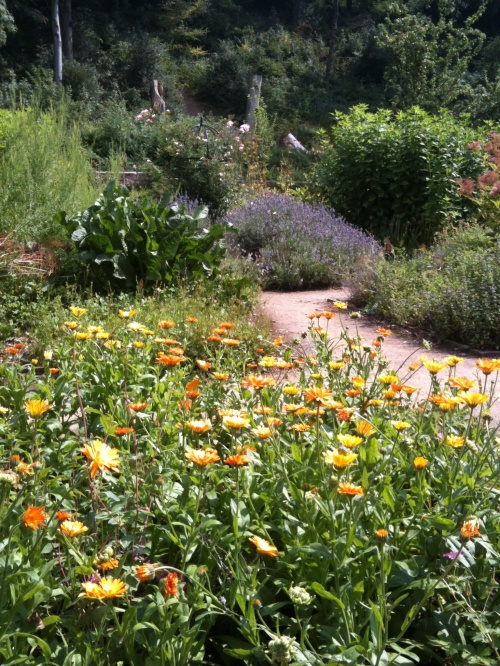 Marigolds in summer sun. Photo: Artemisia