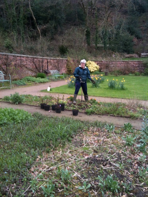 Volunteer weeding one of the beds in the Walled Garden.