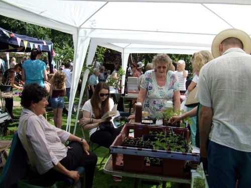 Plant stall at Festival