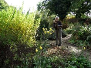 Volunteer gardener at work in the Walled Garden. Photo: Artemisia
